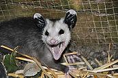 eliminates rodents