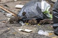 eliminates pests in trash cans