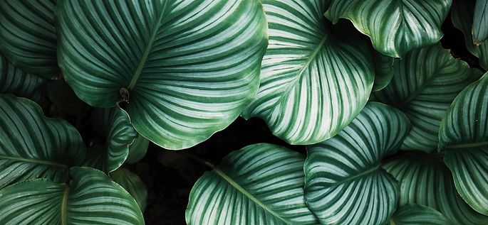 green-and-white-leafed-plants-80339-1125x2436_640_edited.jpg