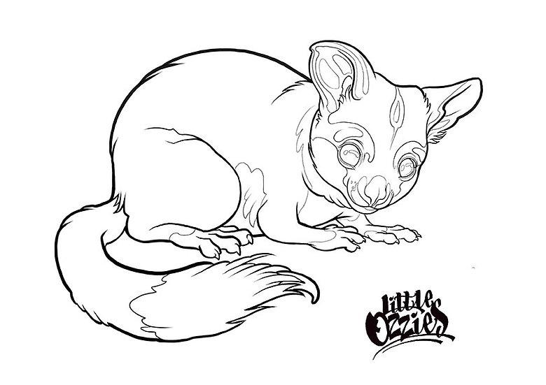 Print and colour Possum