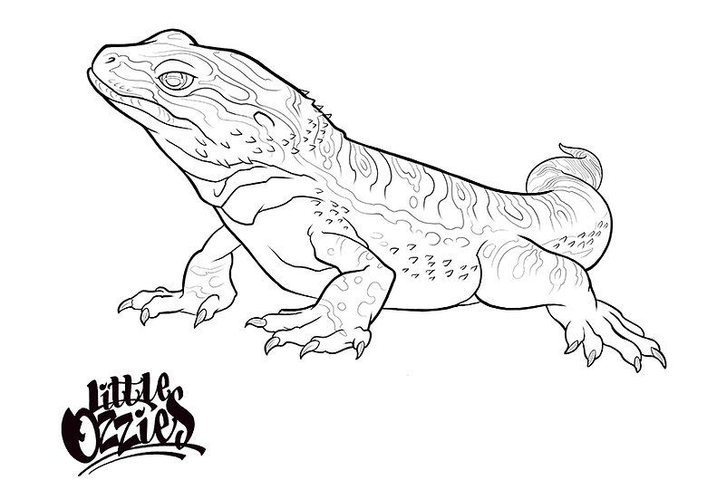 Print and Colour Bearded Dragon