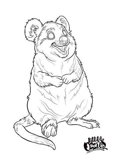 Print and colour Quokka