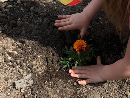 Pflanzprojekt im Kindergarten