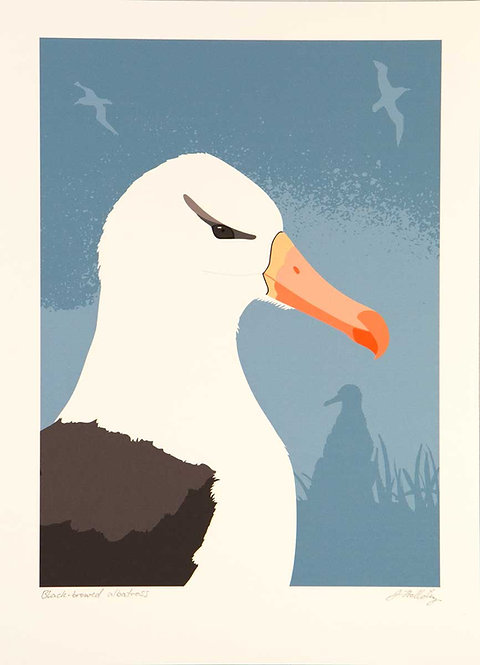 Fine Art Print – Black-Browed Albatross