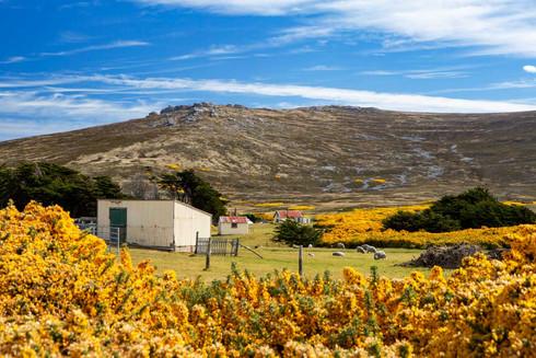 Weddell Island settlement