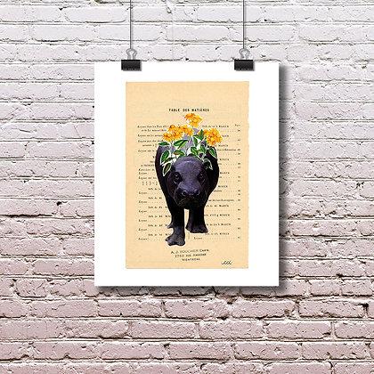 L'hippopotame, cet animal féroce - Sur papier beaux-arts
