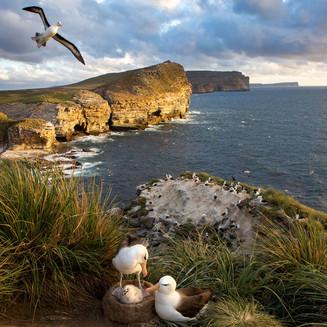 New Island cliffs