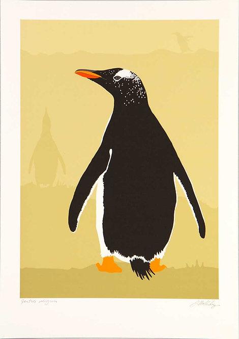 Fine Art Print – Gentoo Penguin