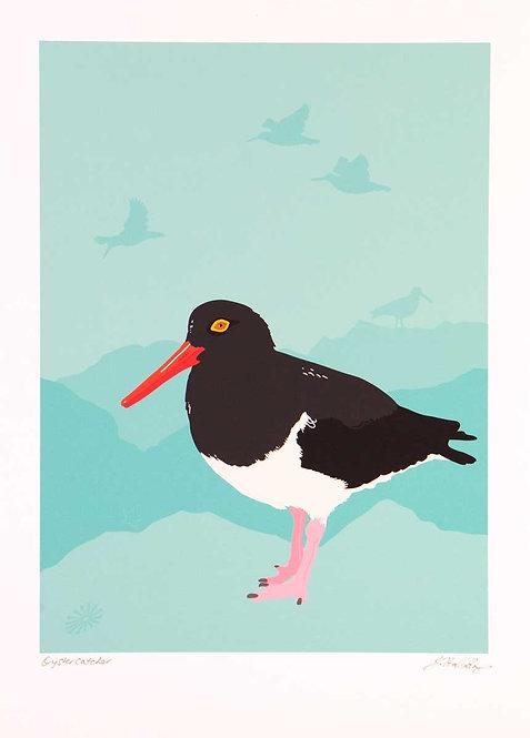 Fine Art Print – Oystercatcher