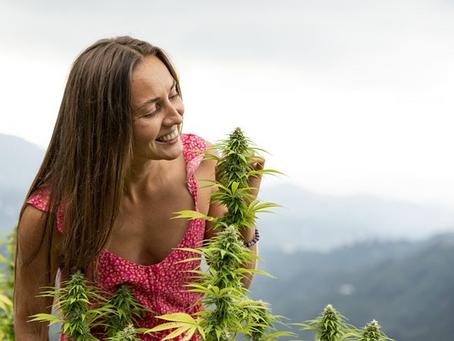 Medical Marijuana Cards - Safe, Helpful And Stress-Free