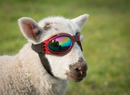 Don't be a sheep, make the most of your LAM! (LAM Lens Upgrade)
