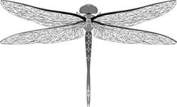 dragonfly-161745_1280.2.jpg