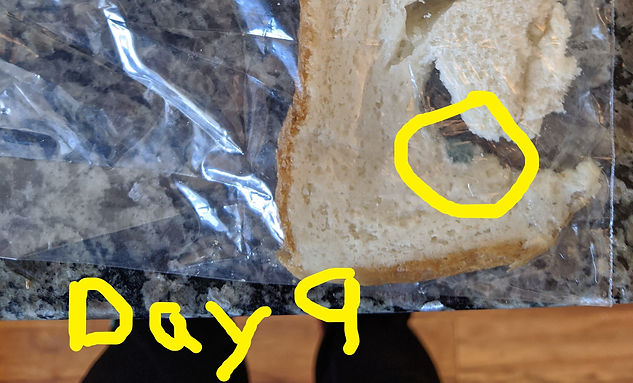 mold day 9.jpg