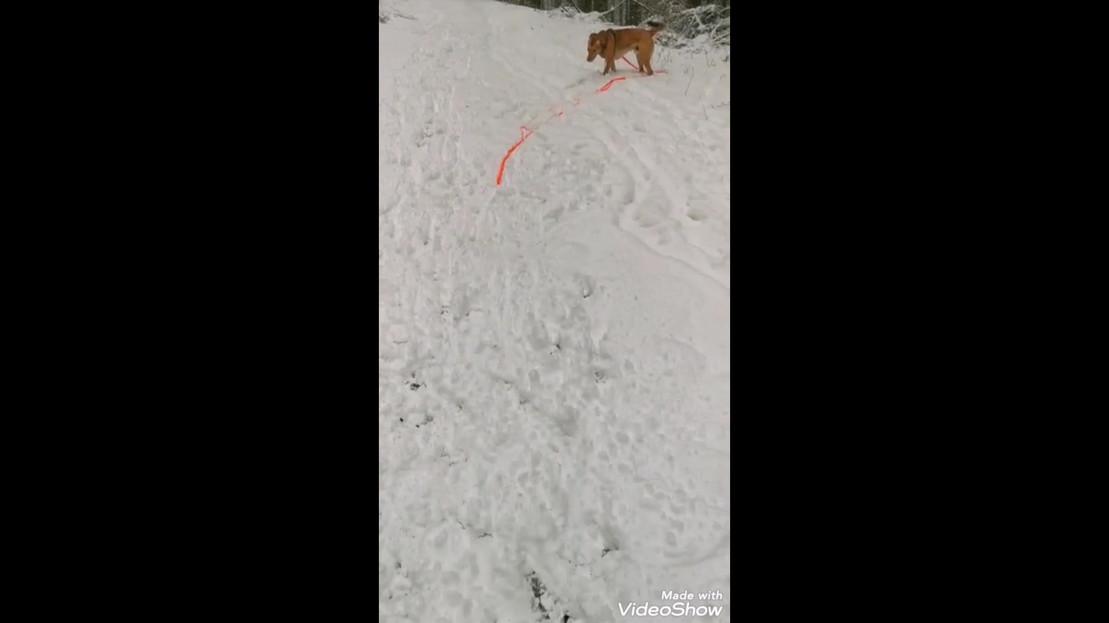 Spaß im Schnee