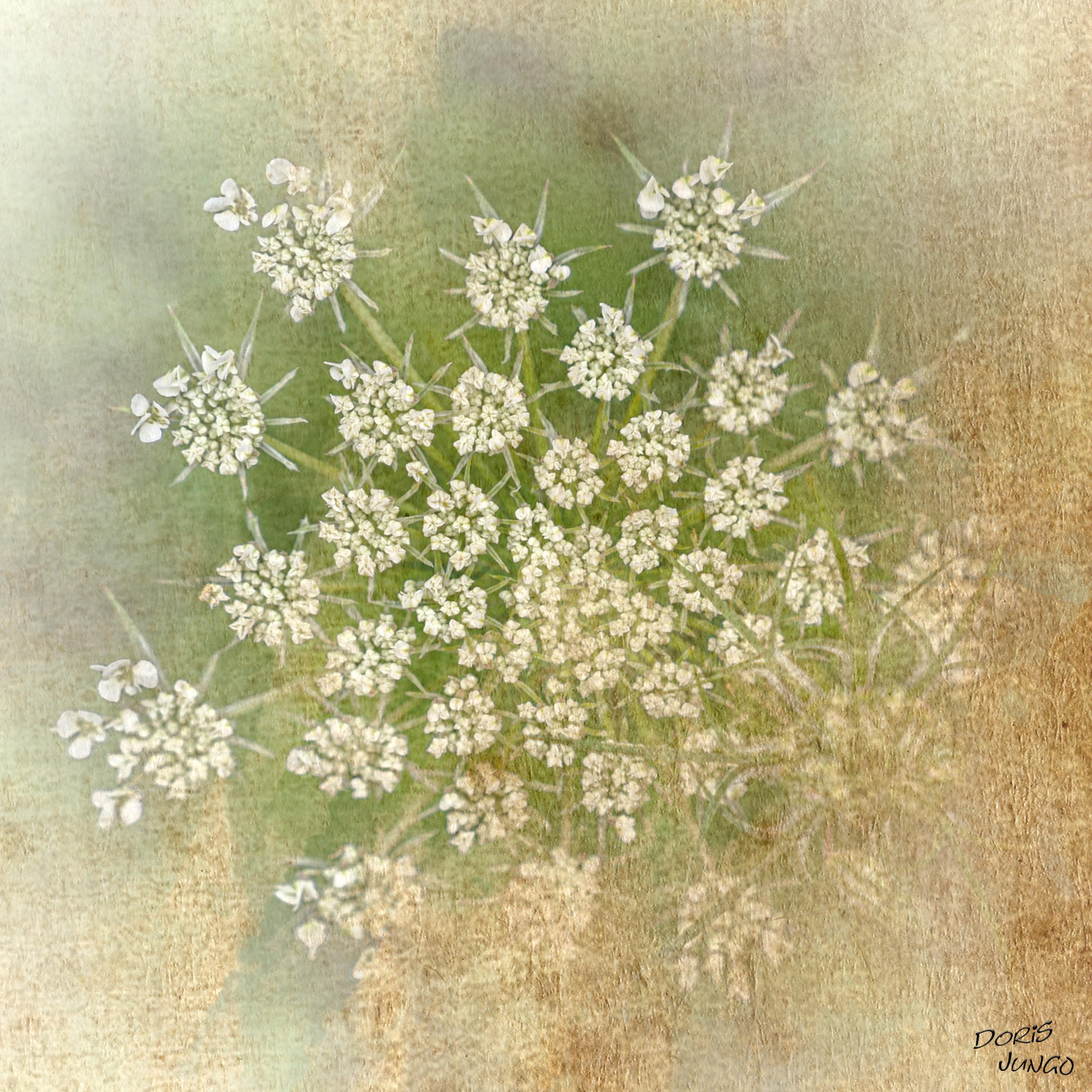 "Petites fleurs ""framées"""
