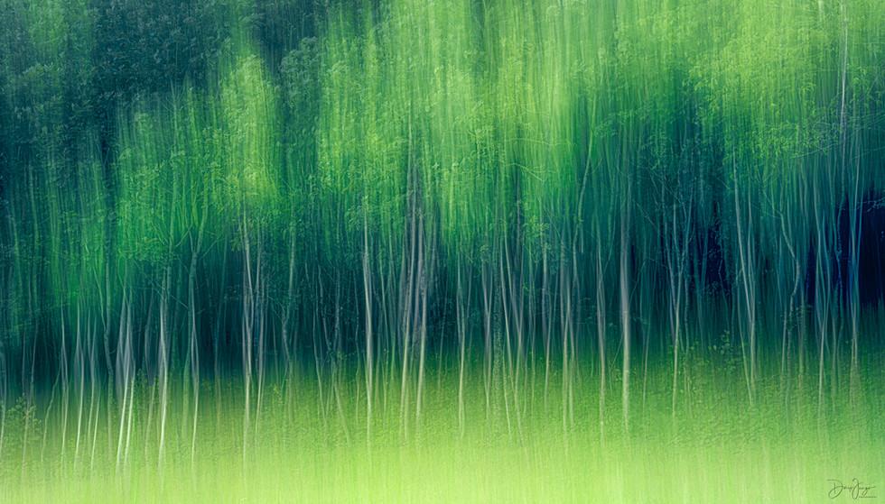 Le bois charmant