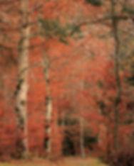 L'automne (1 sur 1).jpg