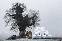 L'arbre pris d'assaut