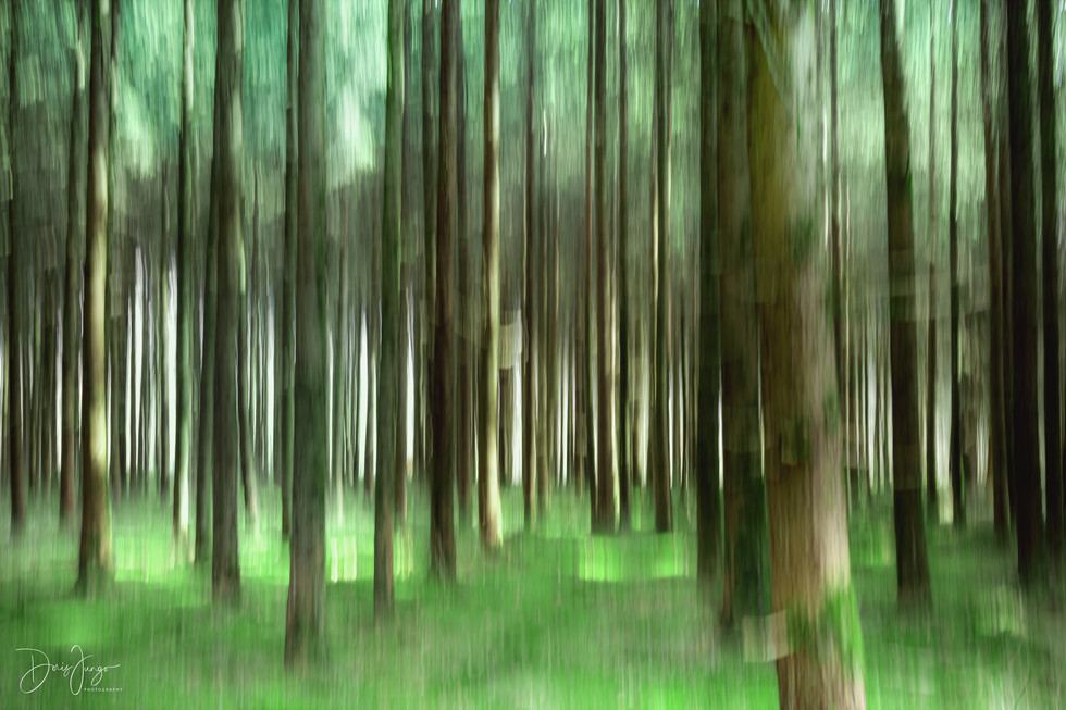 Le tapis vert