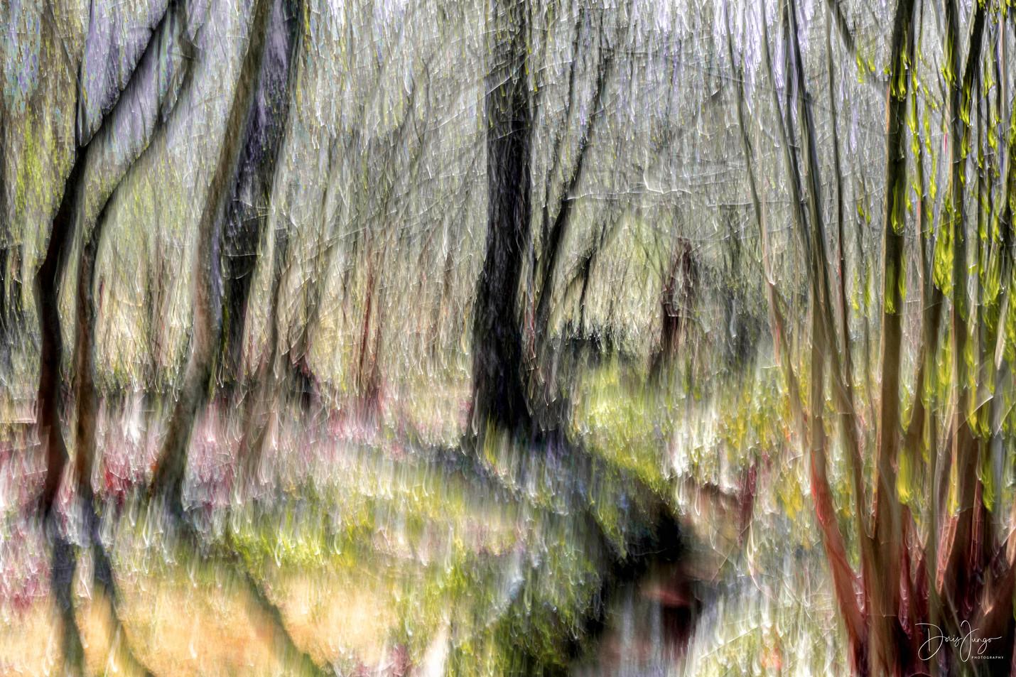 Matin de soleil dans la forêt