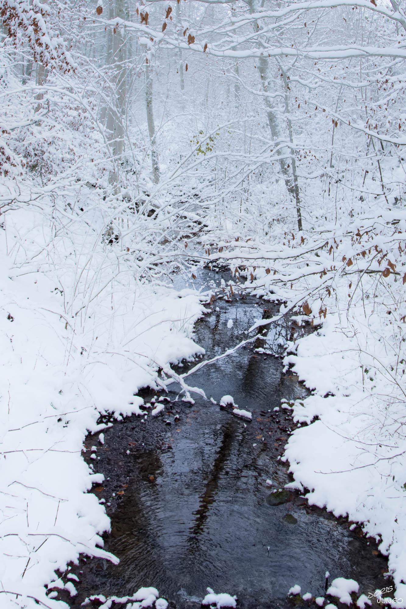 Le ruisseau en Hiver