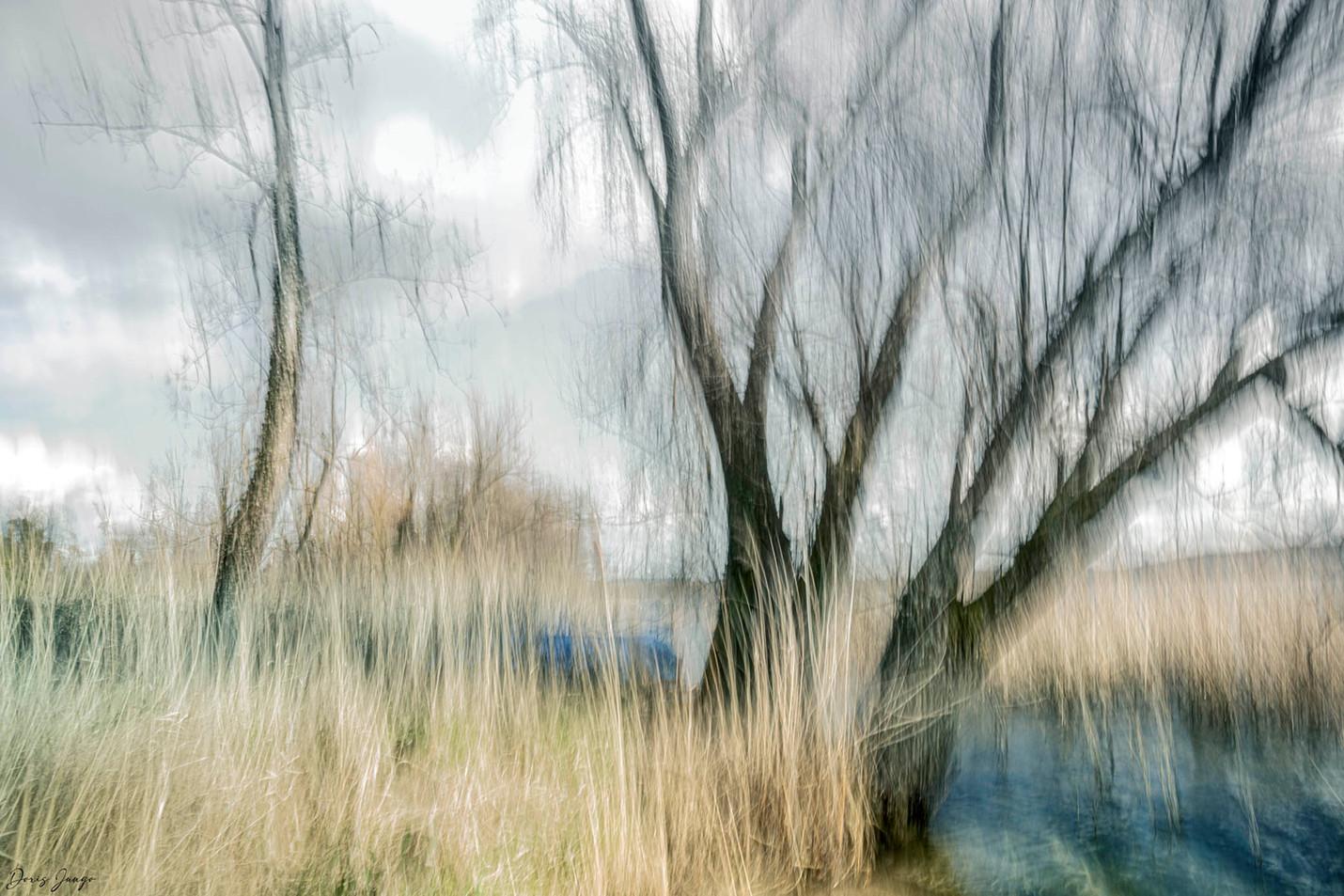 L'arbre au bord du lac