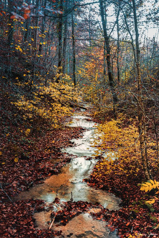 Le ruisseau dans la forêt magique