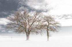 Arbres en hiver (2016)