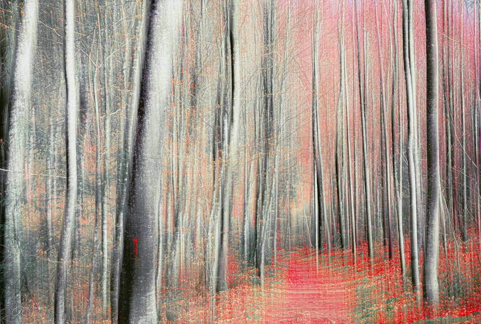 Les feuilles rouges
