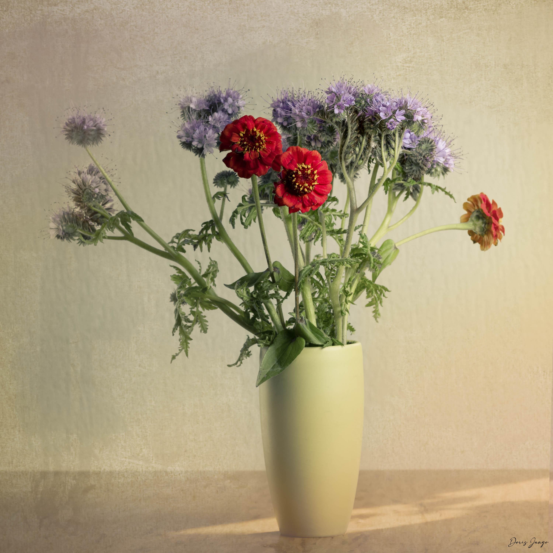 Le bouquet de phacélia