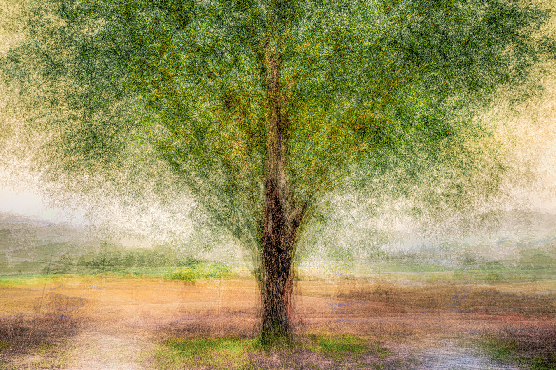 L'arbre seul