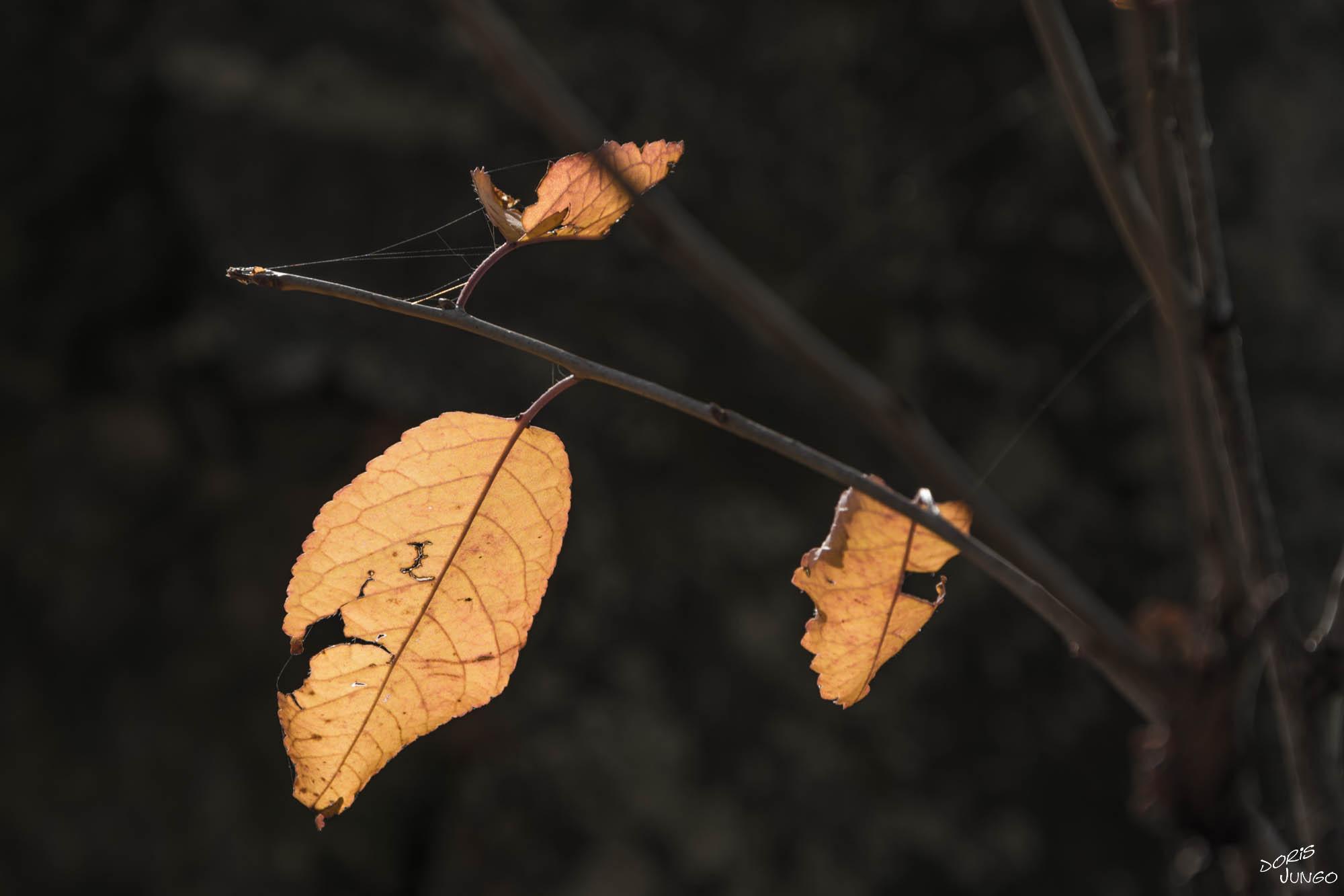 Les dernières feuilles