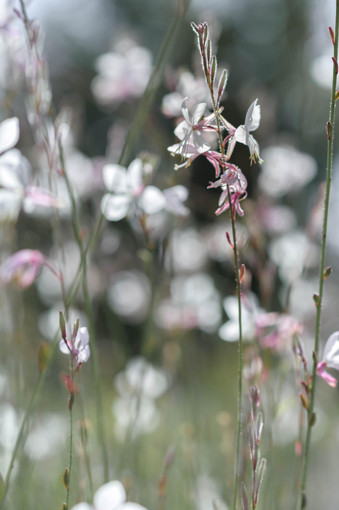 """Fleurs de """"L'autre jardin"""""""