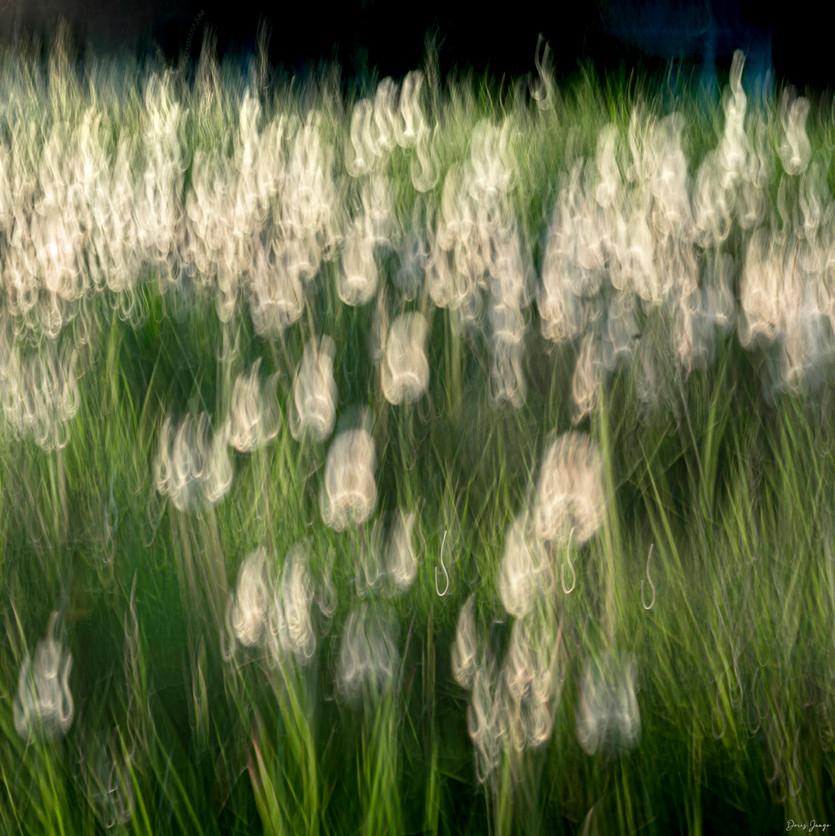 Fleurs de la nuit