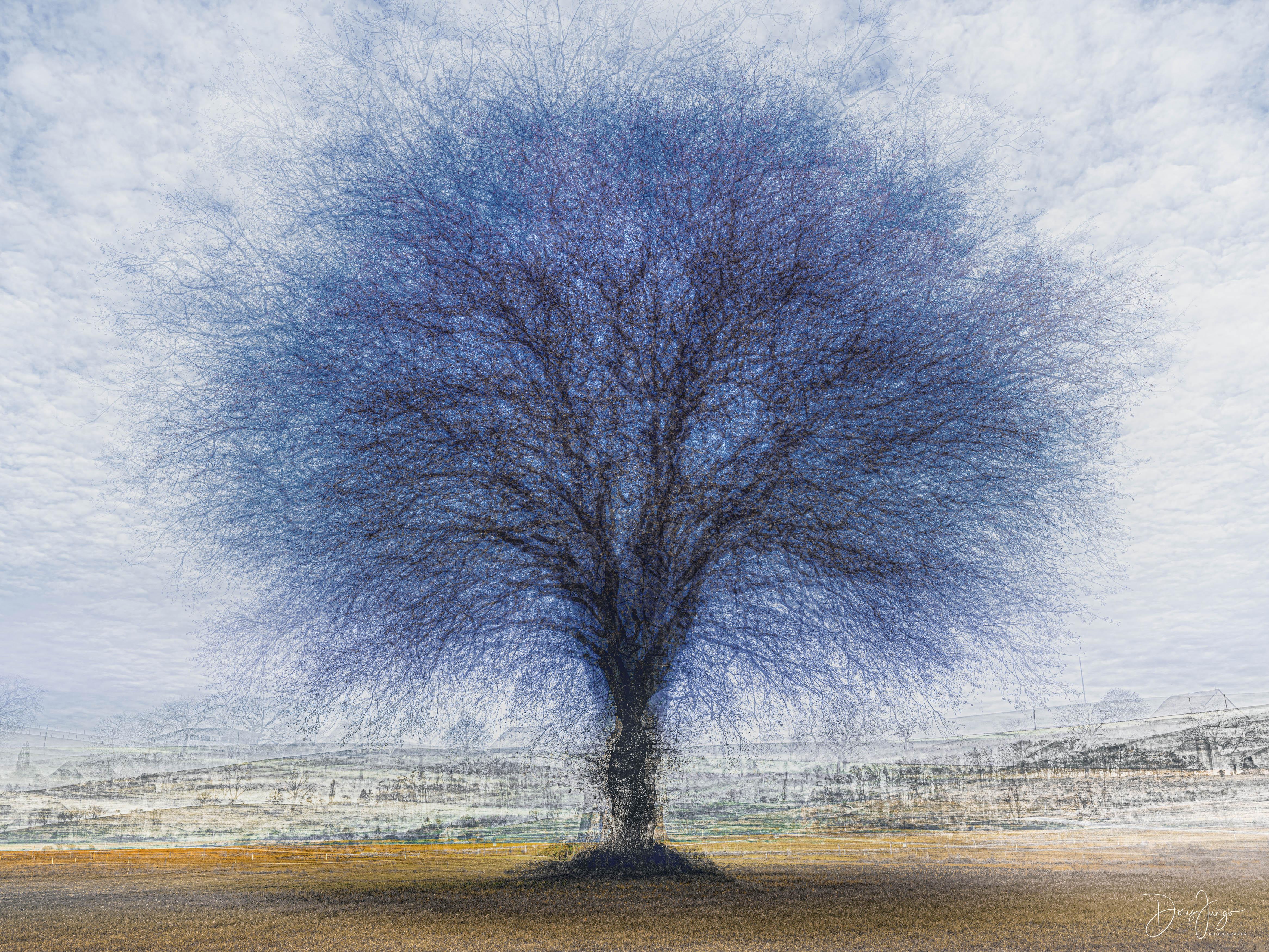 L'arbre bleu