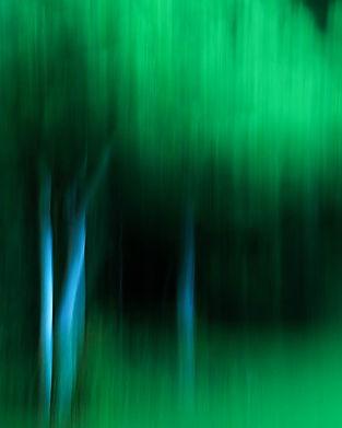 L'arbre le soir (1 sur 1).jpg