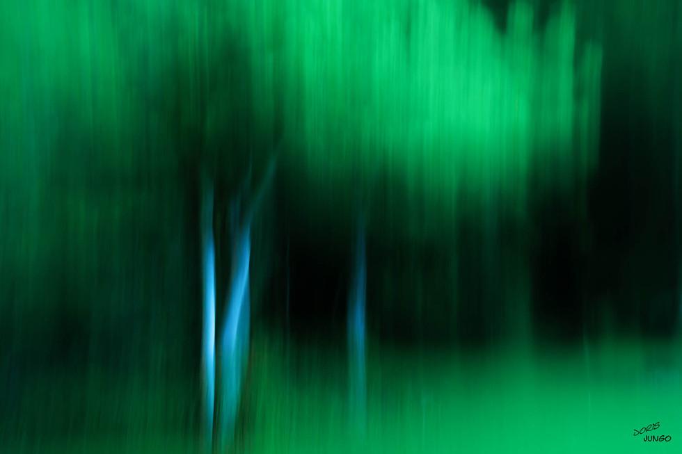 L'arbre le soir