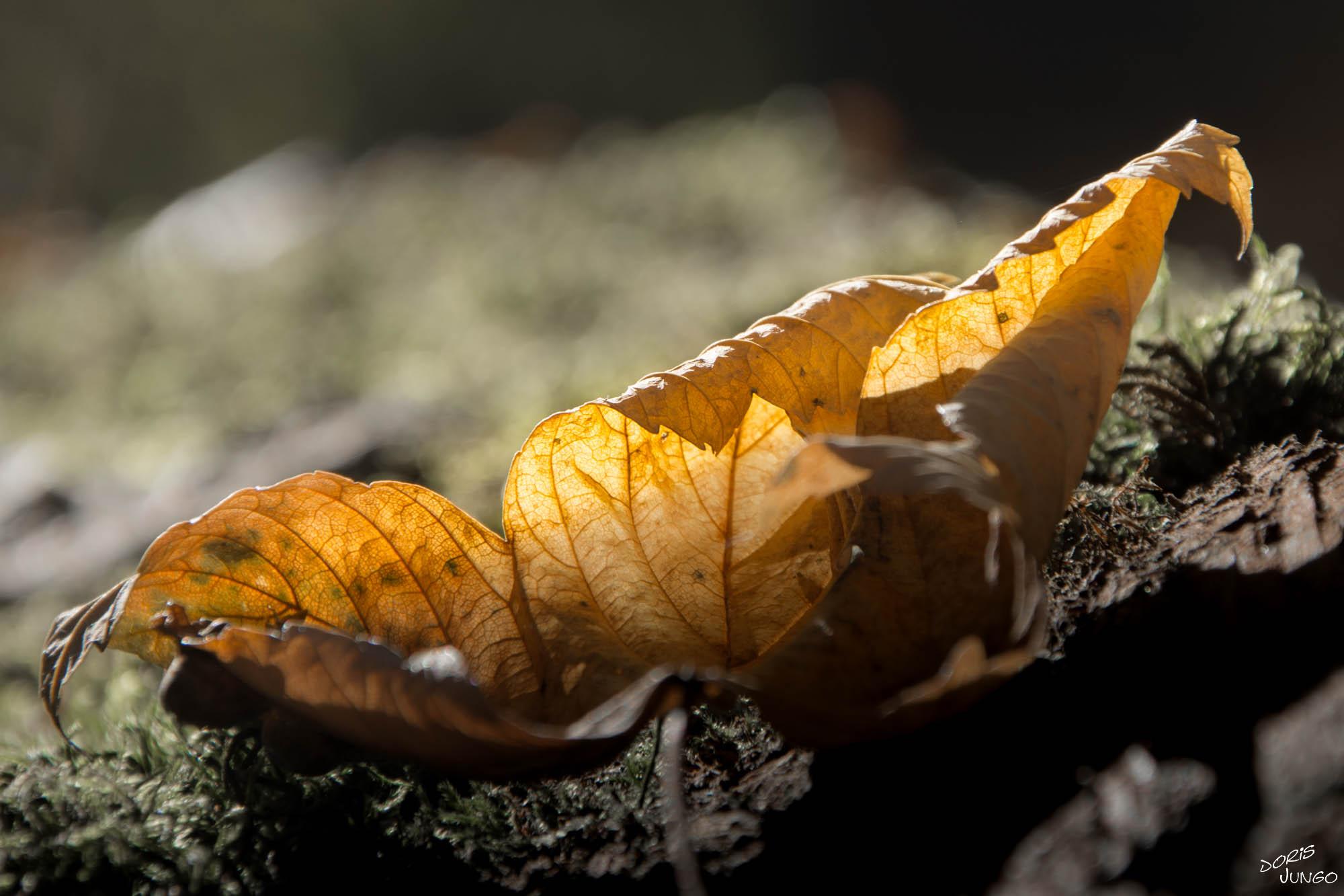 La beauté d'une feuille morte