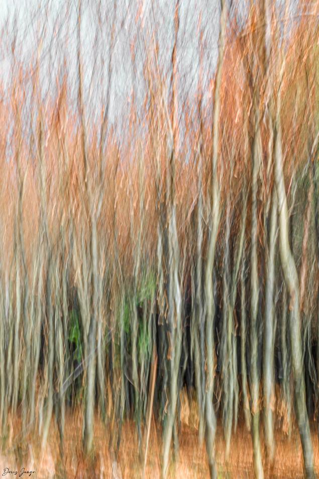 Les arbres allumés