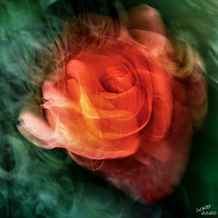 Le Parfum d'une rose
