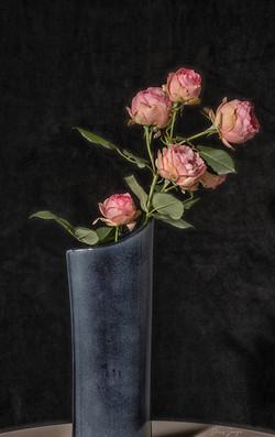 La branche d'un rosier ancien