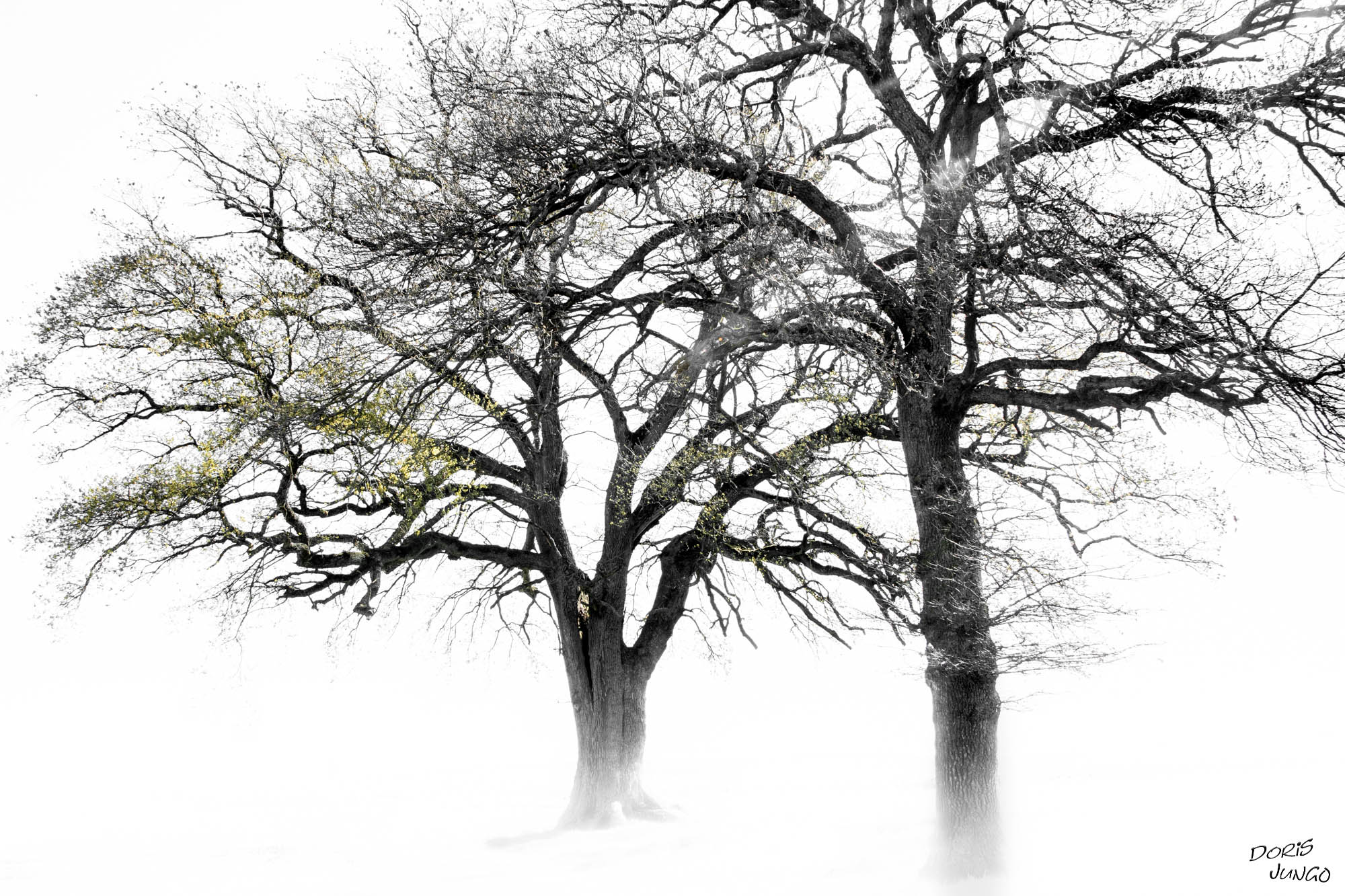 L'arbre aux feuilles jaunes