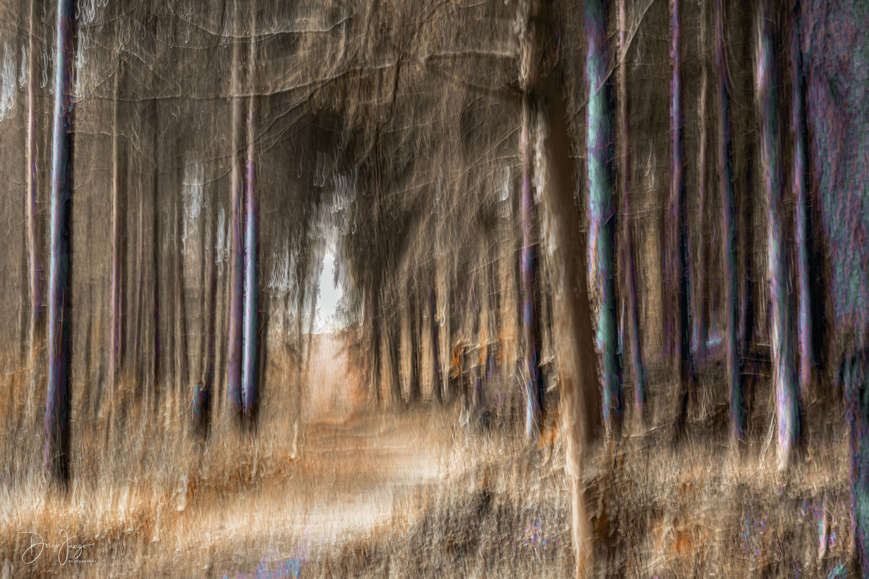 Le chemin à l'ombre