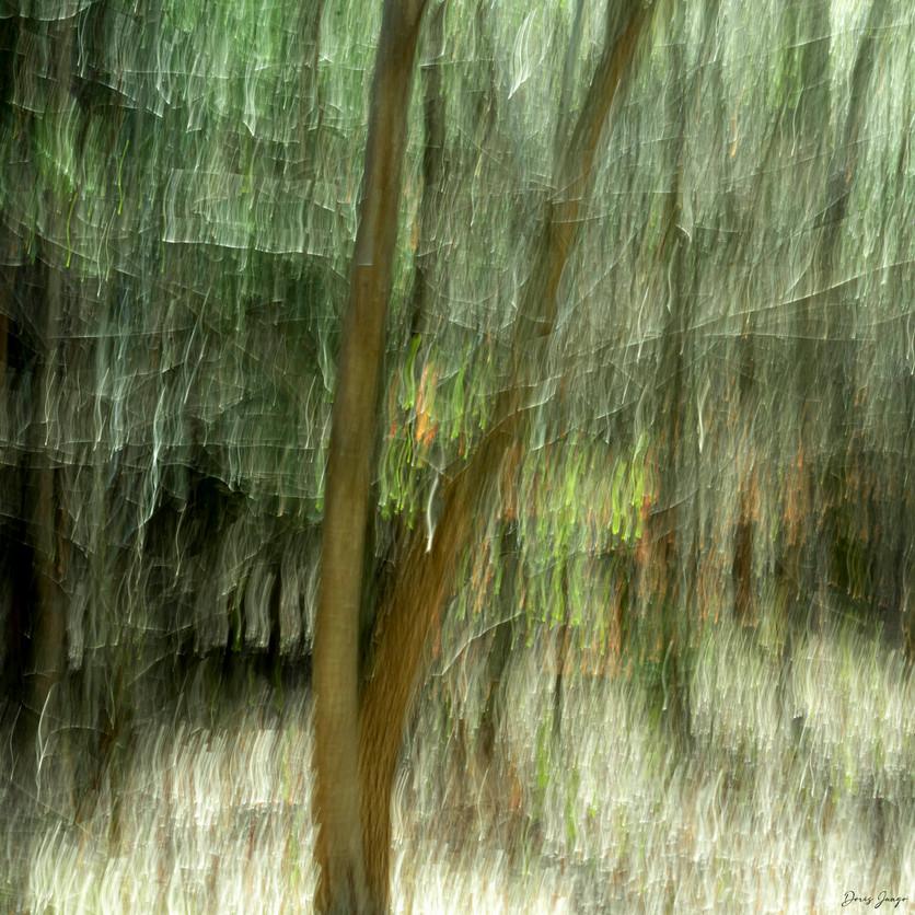 Le petit arbre au milieu de la forêt