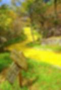 yellow web.jpg