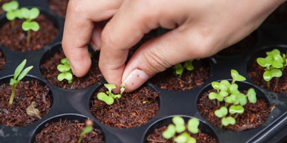 Zemědělství jinak: Akvaponie