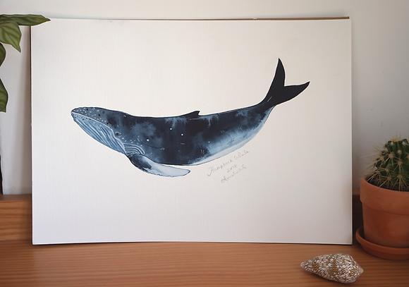 Humpback whale original Watercolour
