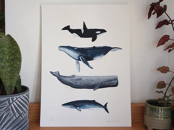 Whales original Watercolour