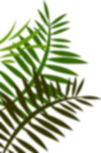 jungle-leaves-png-6.png