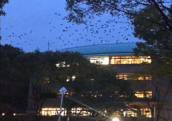 【写真】鳥獣被害|法政大学新聞1048